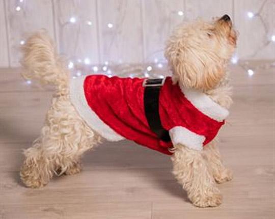 Dogs Santa suit
