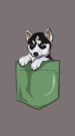 Husky Dog in the pocket