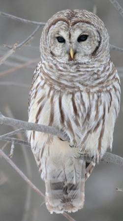 owl bird on a branch